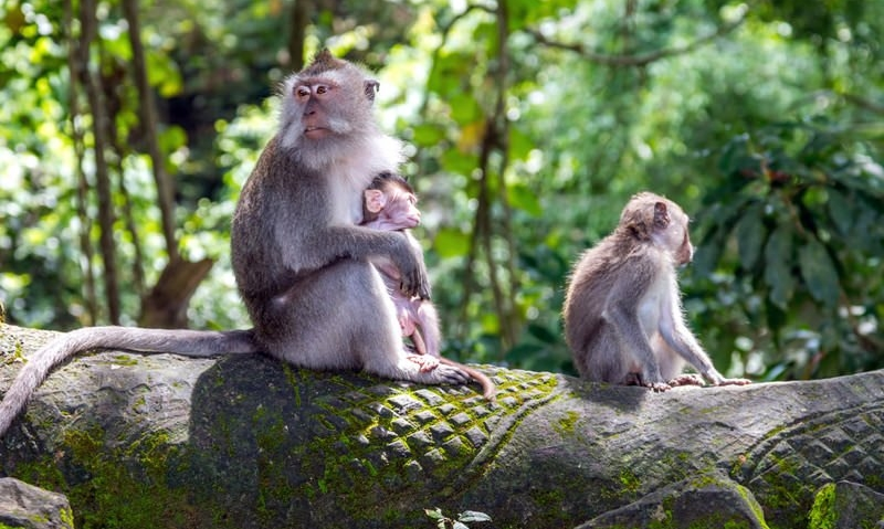 Ubud Monkey Forest.jpg