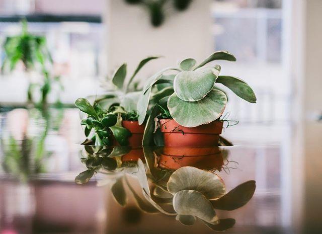 Plant goals 🌱