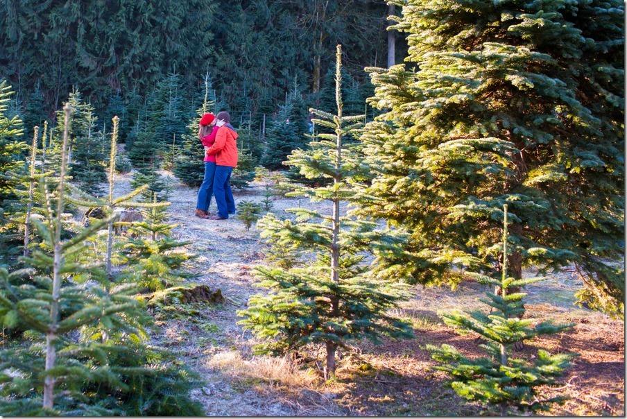 10-treefarm13-23