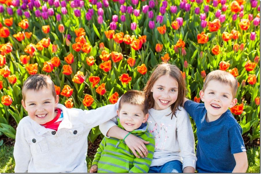 1-tulips-3