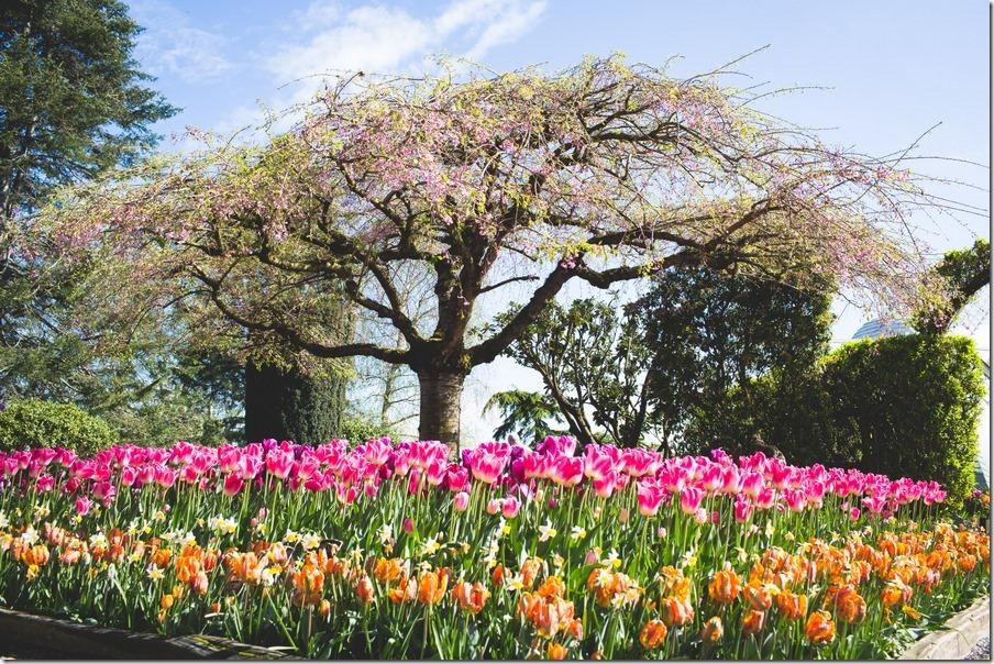 35-tulips-10