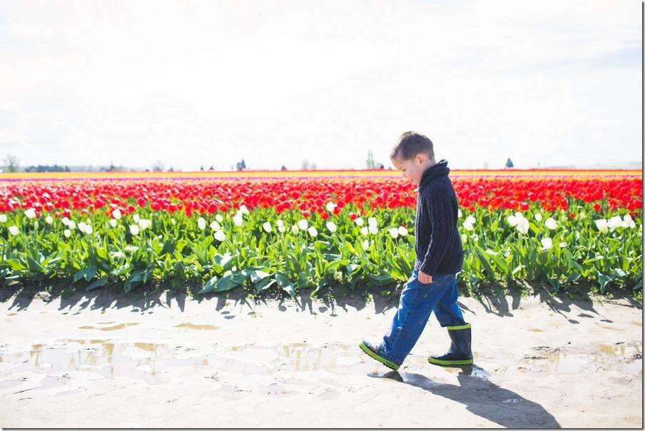 40-tulips-48
