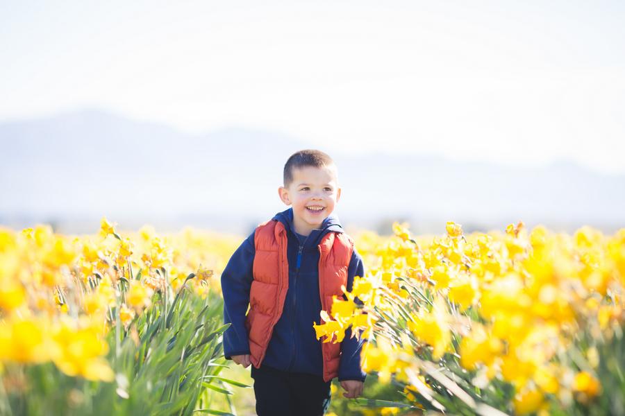 04-tulip-1-2.jpg