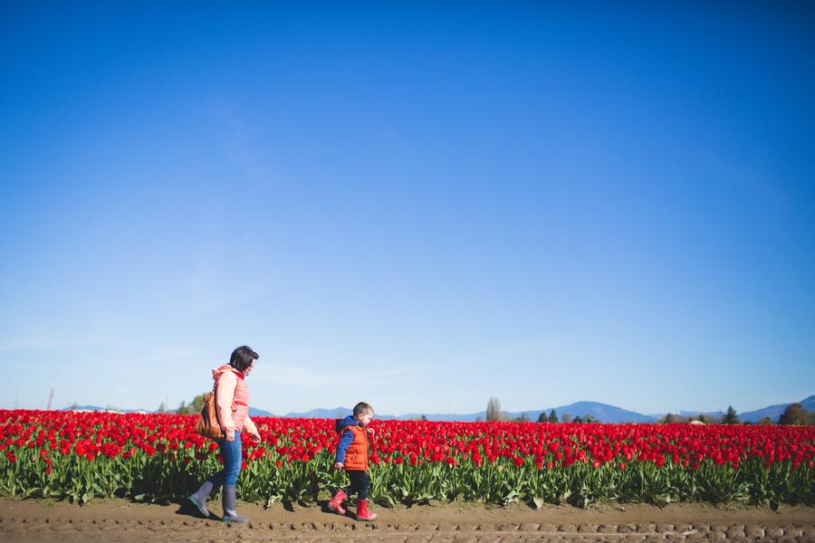 08-tulip-24.jpg