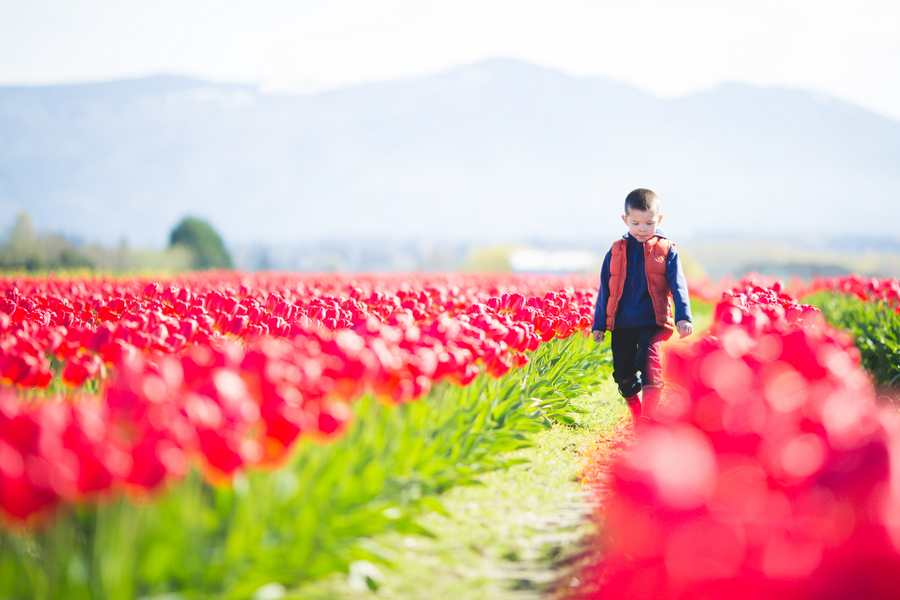 09-tulip-29.jpg
