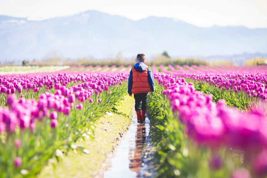 15-tulip-53.jpg
