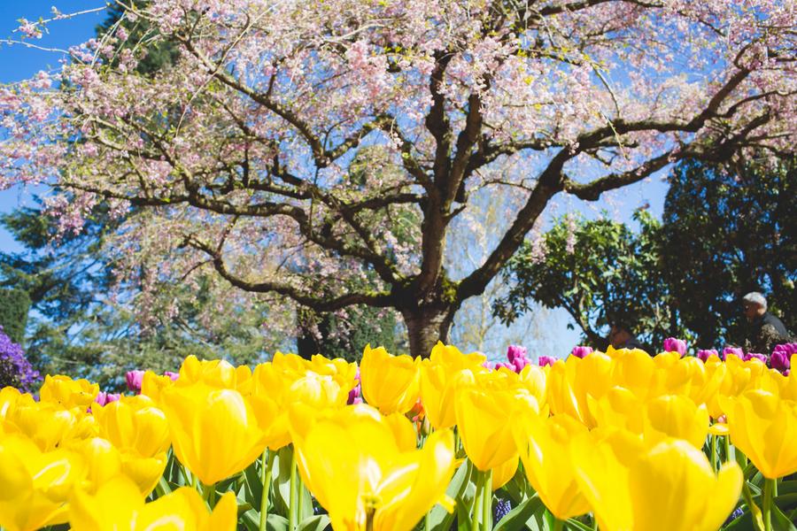 25-tulip-93.jpg