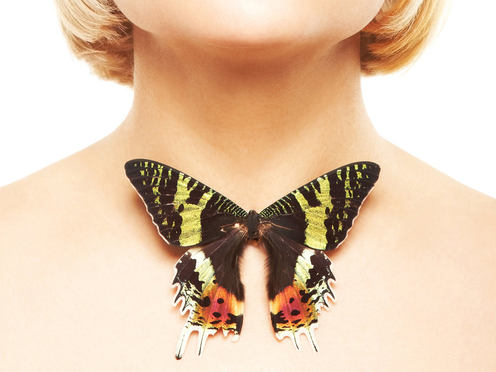 thyroidbutterfly.jpg