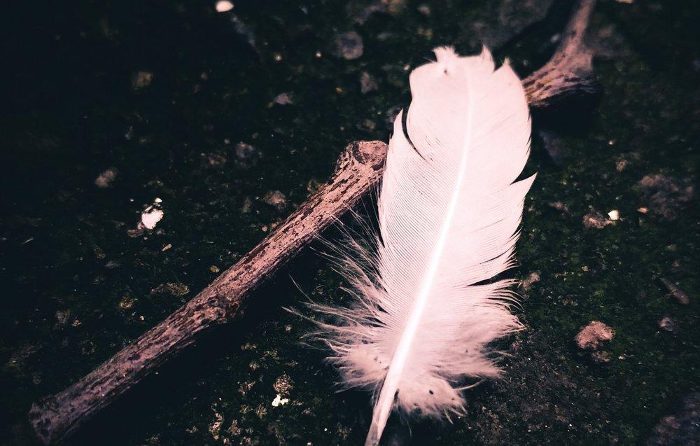 close-up-dark-feather-394376.jpg