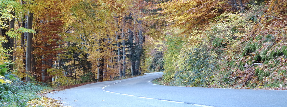 2015 10 30 X Legris Forest Road 01.JPG