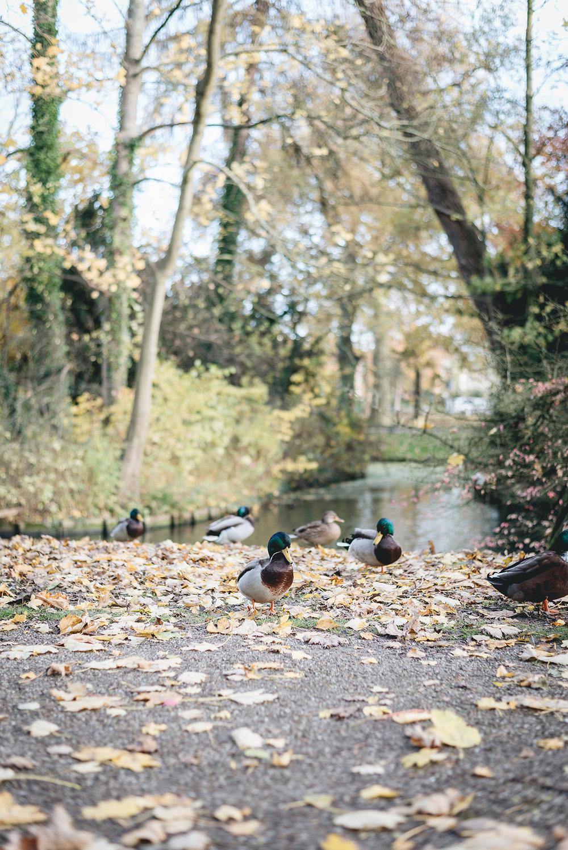 autumn's_last_murmur