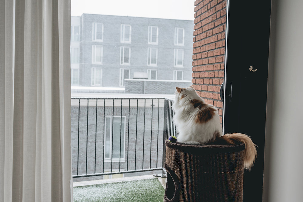 Darwin watching the snow falling