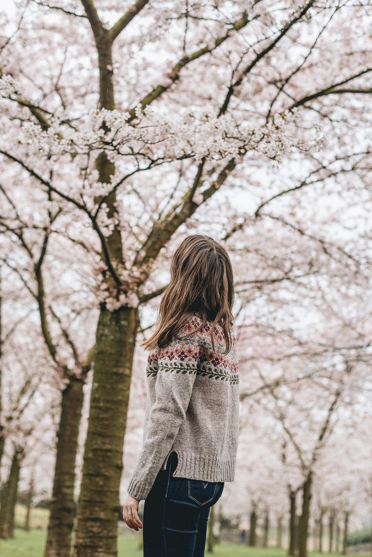 hanami-sakura-cherry blossom-birkin sweater