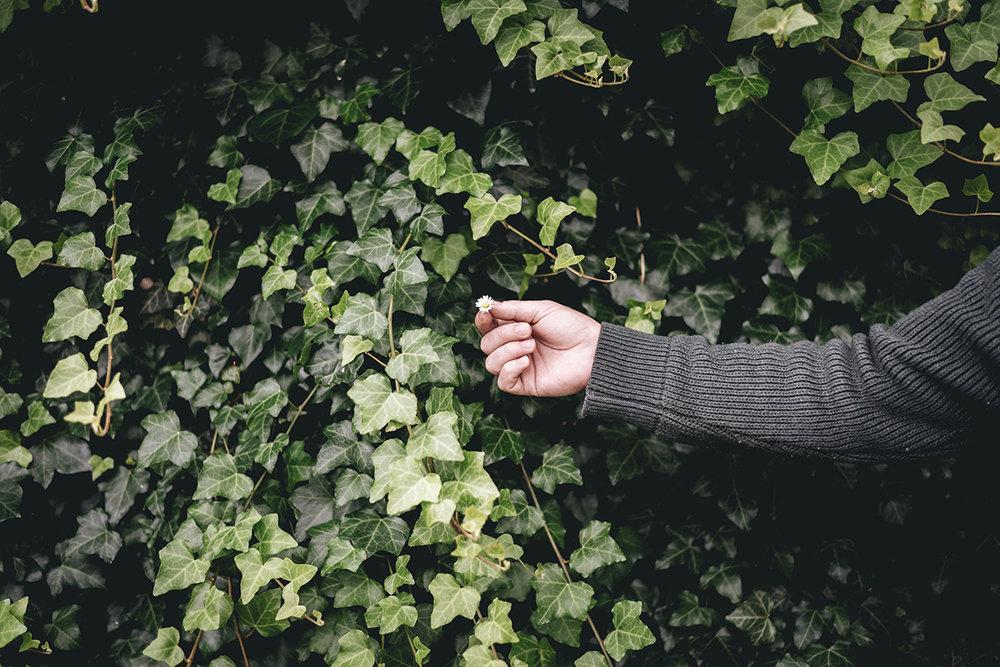 flower-hand-ivy