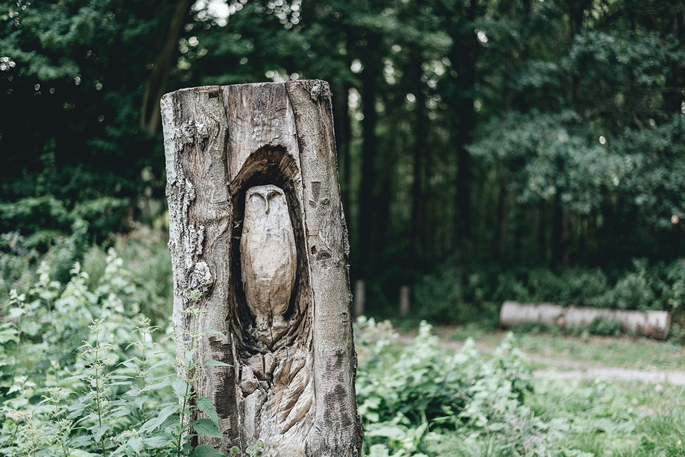 owl carved in wood tree