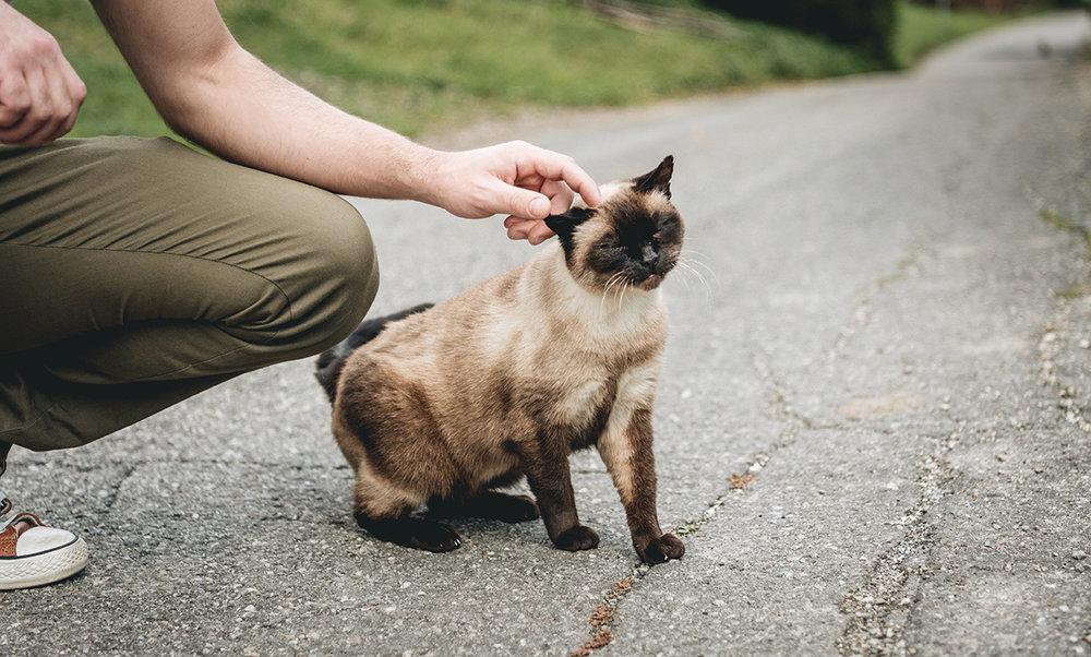 Dolomites cat