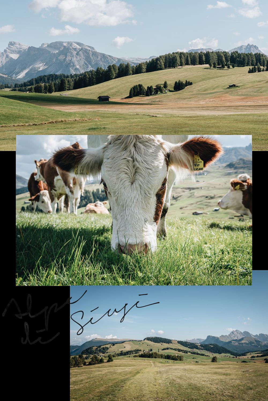Dolomites: Alpe di Siusi