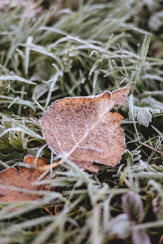 leaf-autumn