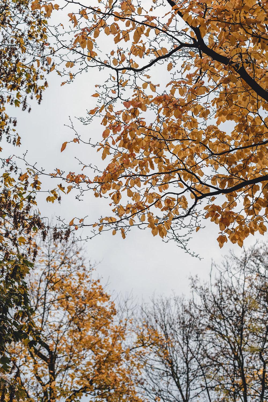 moments-autumn-november