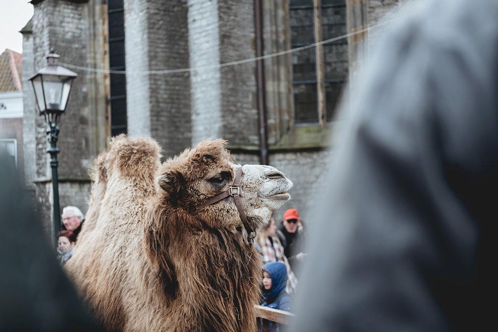 Camel Kerstmarkt Dordrecht