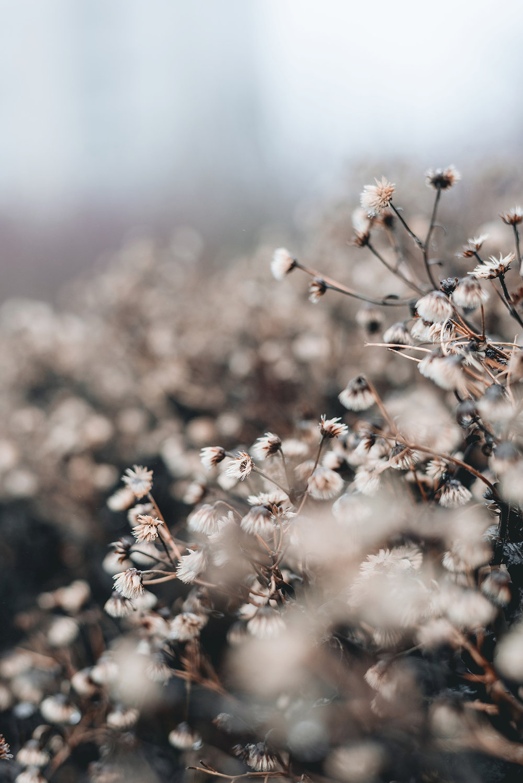 winter-flowers-Patricia-Martins-yellowish-2019