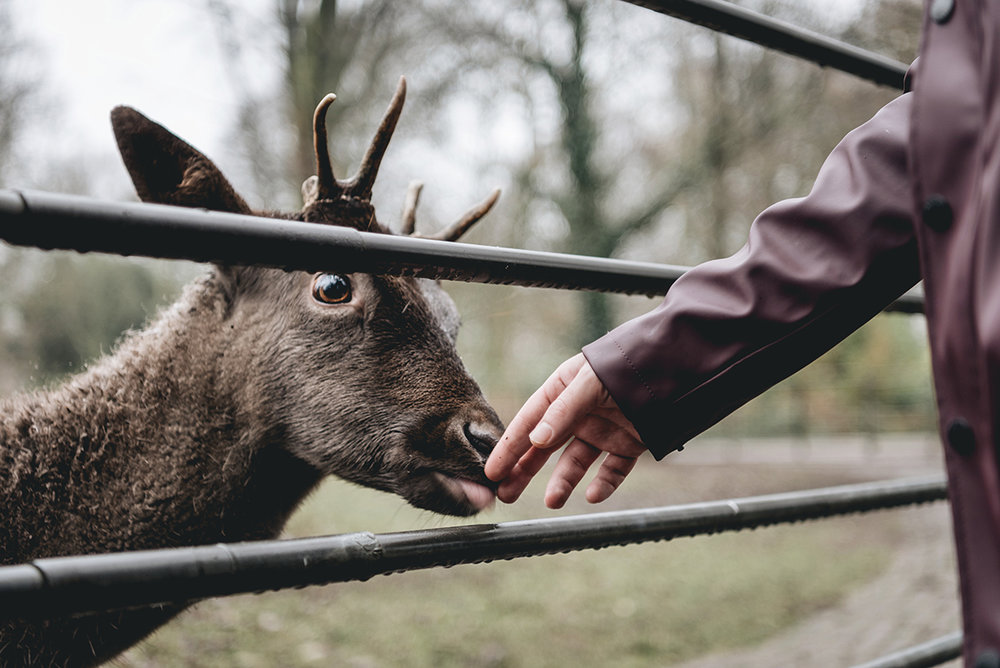Red-deer-winter-january-park-Patricia-Martins-yellowish-2019