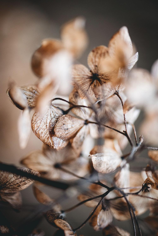 Hydrangea-winter-macro-photography-Patricia-Martins-yellowish-2019