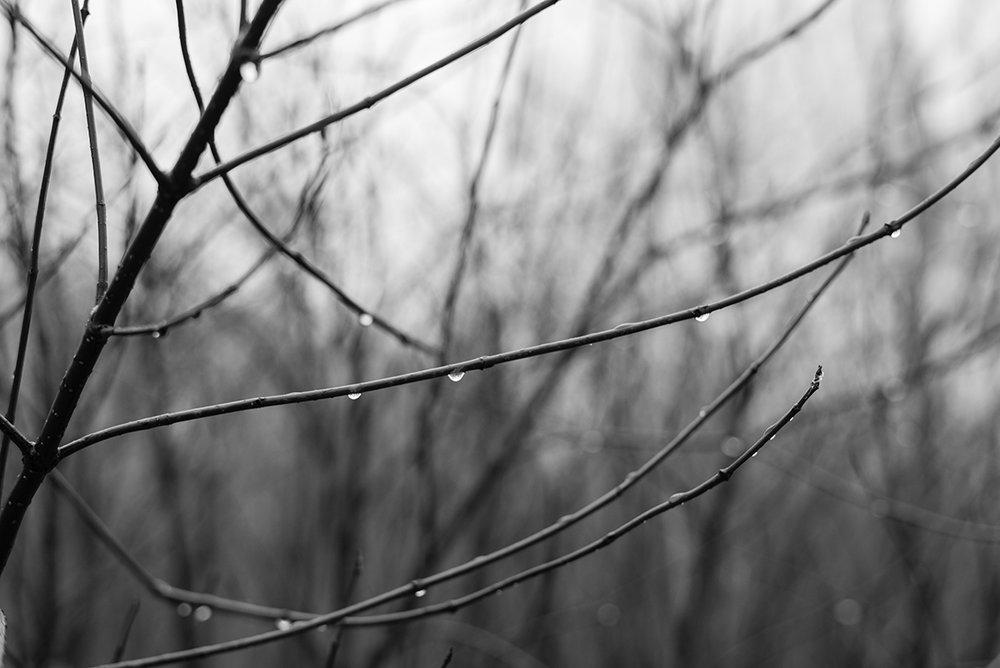 rain-twigs-Patricia-Martins-Yellowish-2019