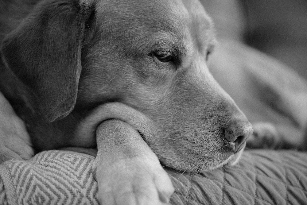 close-up-dog-portrait-Patricia-Martins-Yellowish-2019