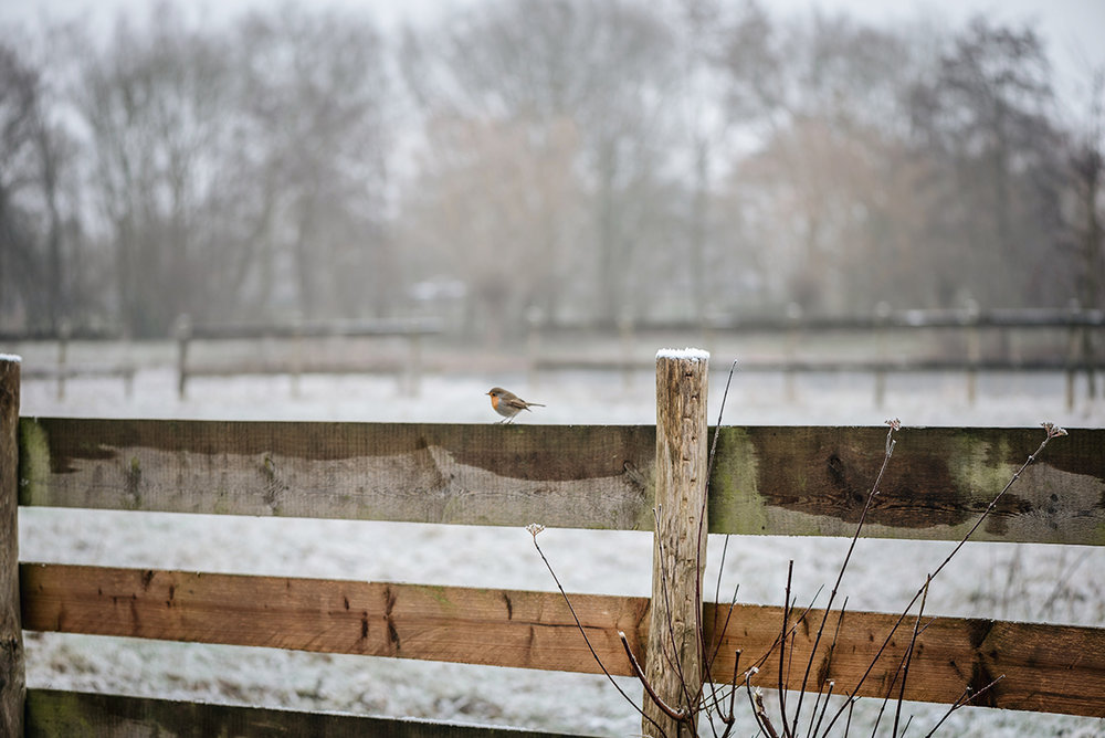 robin-bird-fence-winter-Patricia-Martins-Yellowish-2019