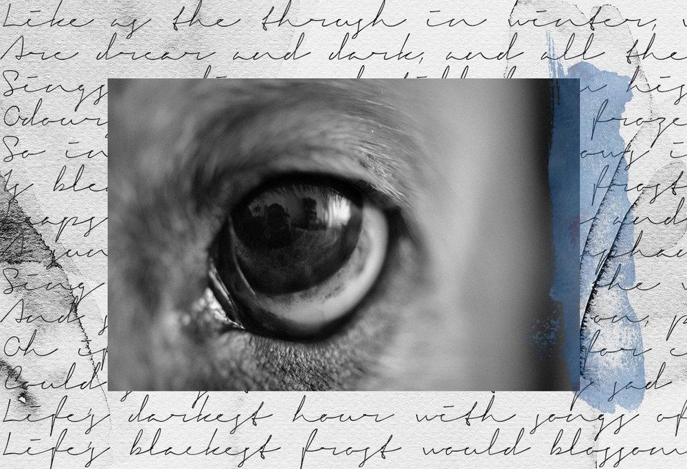 macro-eye-dog-poetry-collage-Patricia-Martins-Yellowish-2019