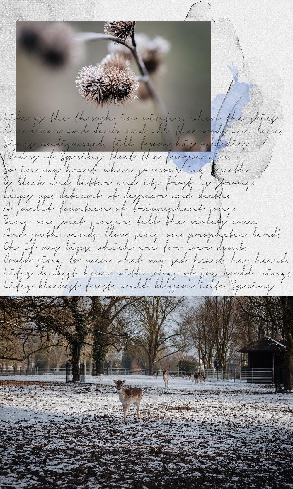 winter-poetry-collage-deer-snow-macro-flower-Patricia-Martins-Yellowish-2019