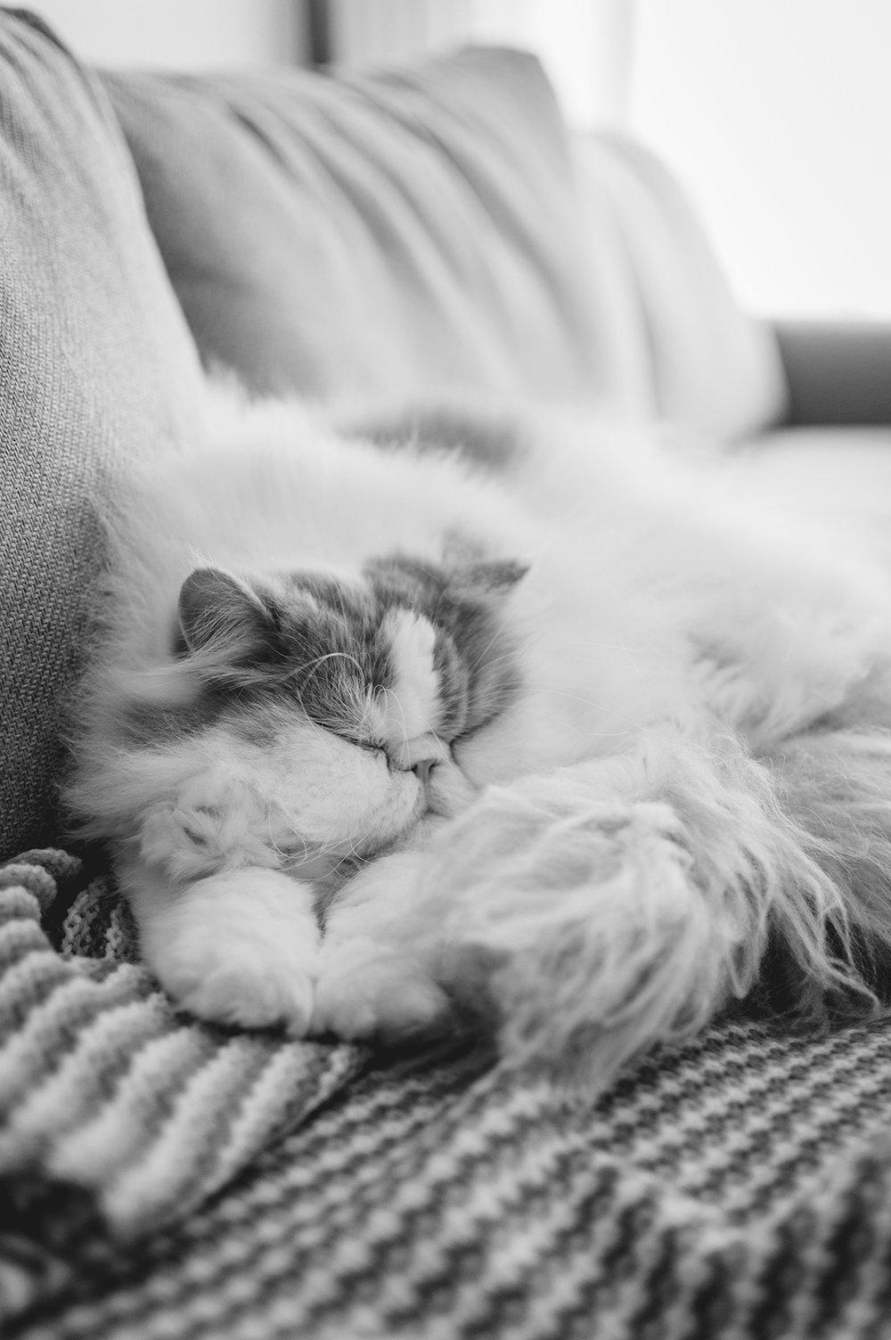 darwin-sleeping-cat-Patricia-Martins-Yellowish-2019.jpg