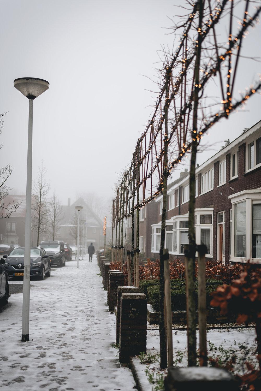 winter-snow-fog-street-Netherlands-Patricia-Martins-Yellowish-2019