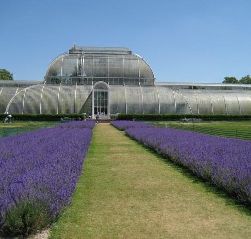Year 7  Kew  Gardens  Empower day 20.03.18.jpg