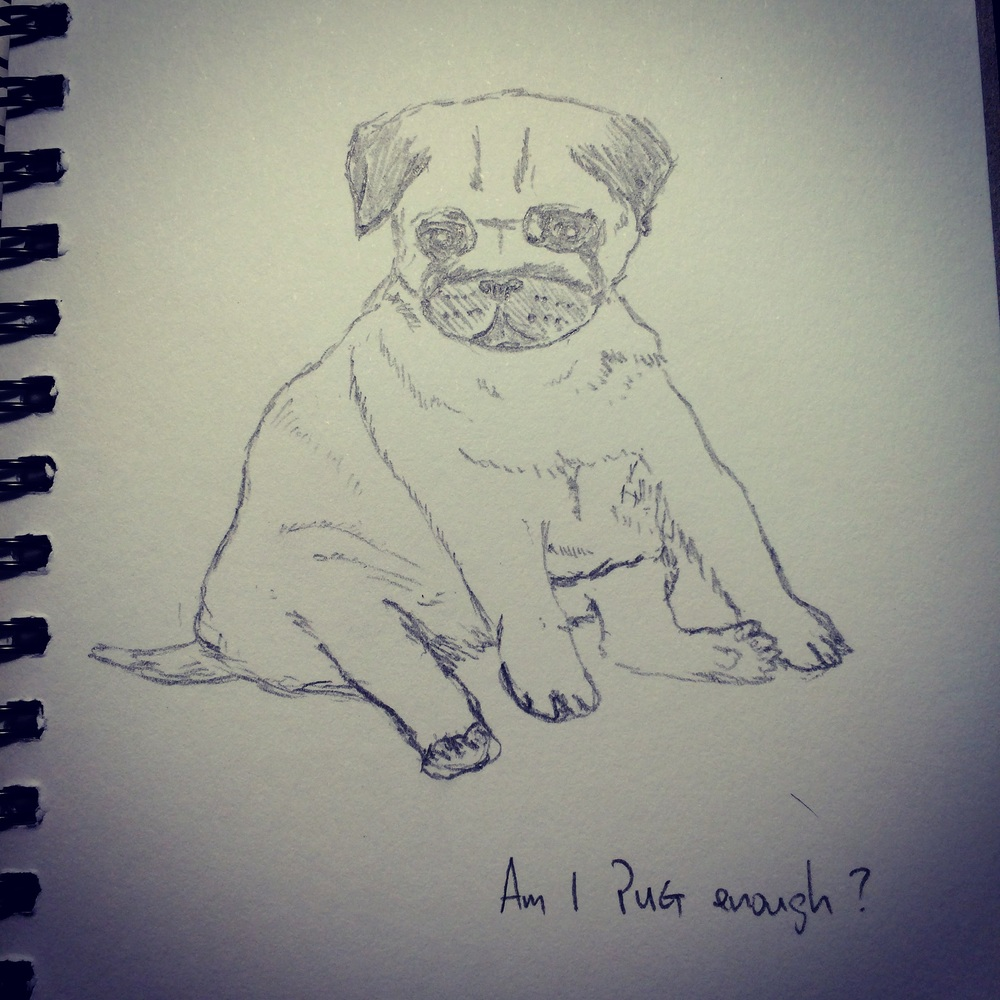 My hesitation at calling this a pug is clear enough. I signed off this drawing with the above question.