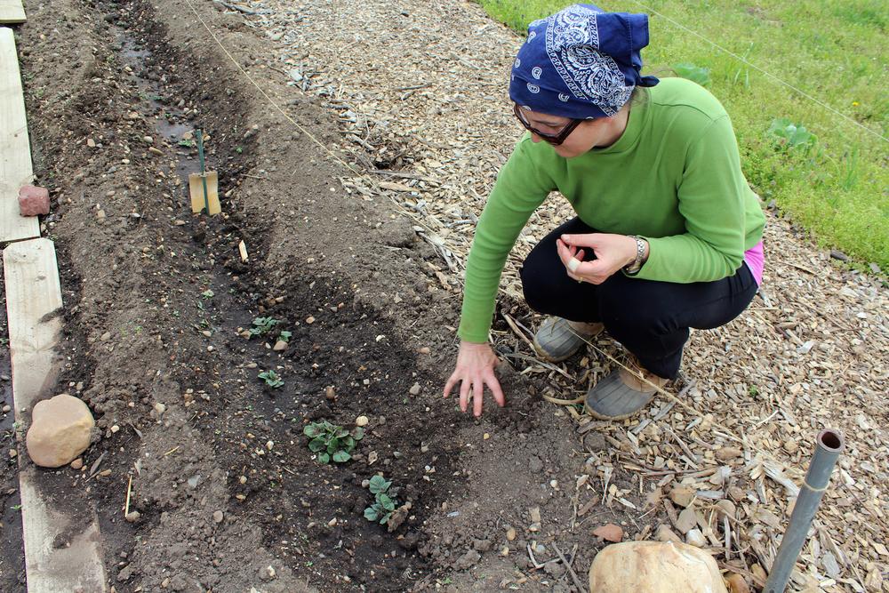 ingrid-planting.jpg