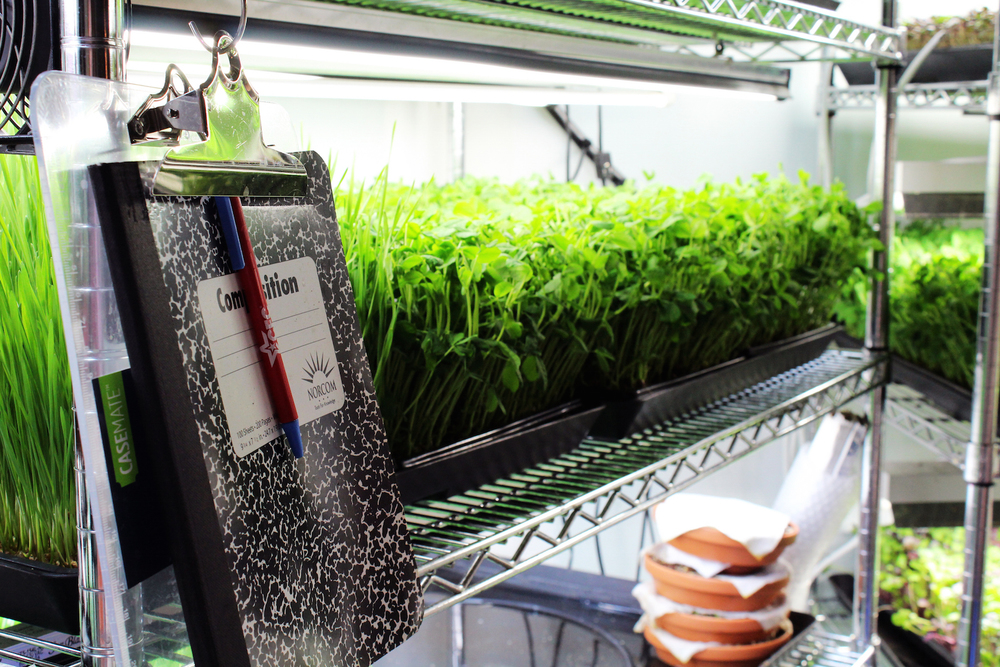Microgreens, the king of urban agriculture. Ackley says it's important to keep track of the microgreen planting schedule.(Photo by Robin Dienel.)