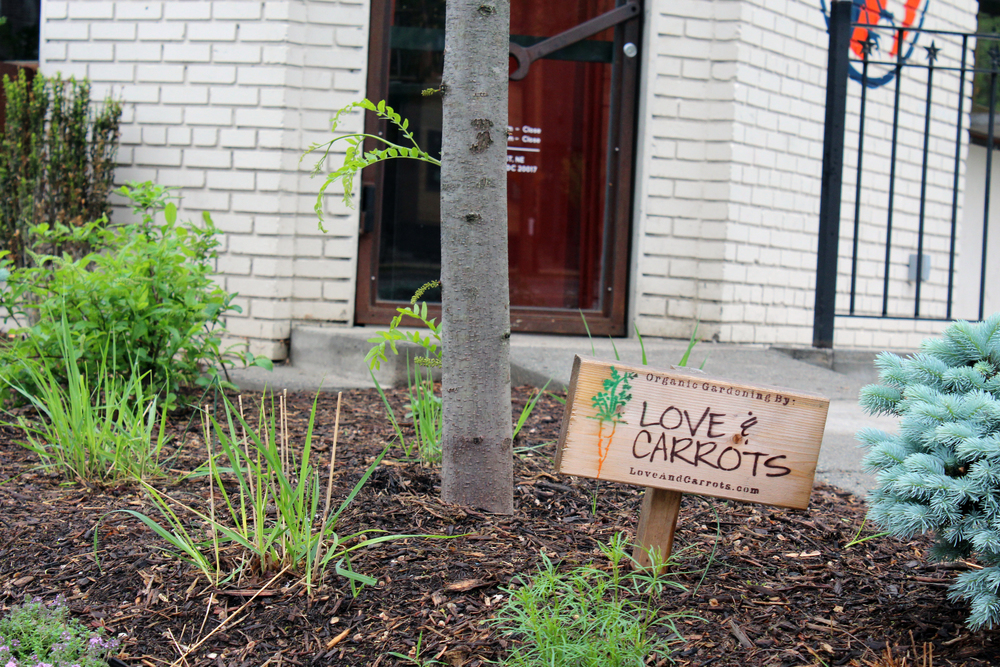 The Love and Carrots sign stands amongst its urban garden installed outside of Brookland's Finest in northeast D.C. (Photo by Robin Dienel.)