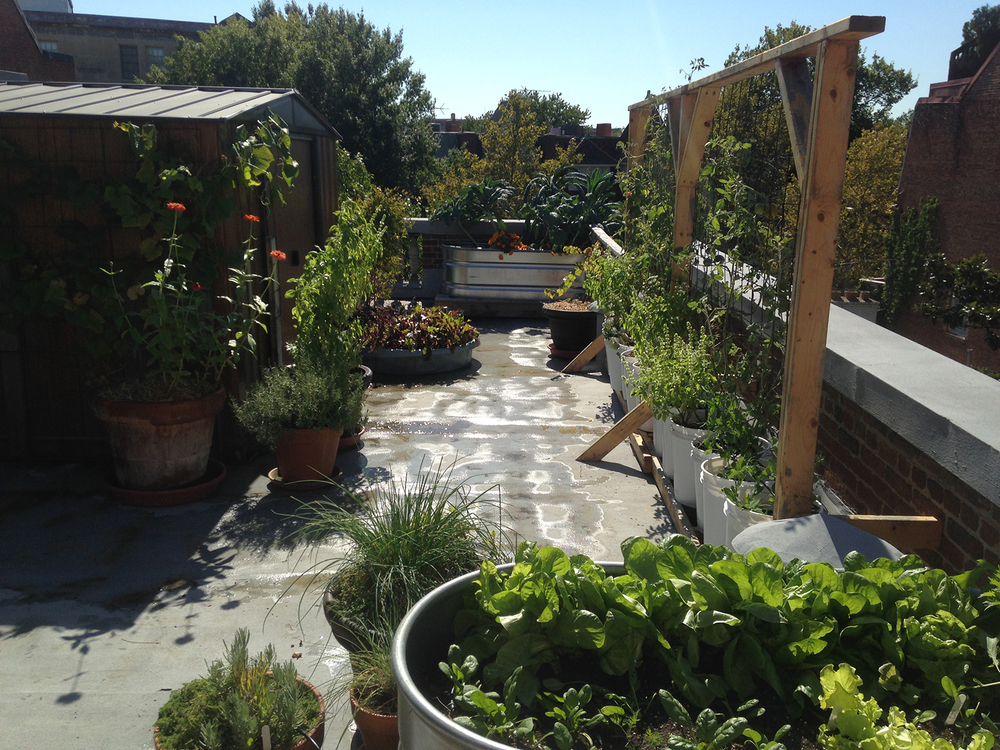 A rooftop garden in Dupont Circle installed by Love & carrots. (Photo courtesy of Meredith Sheperd).