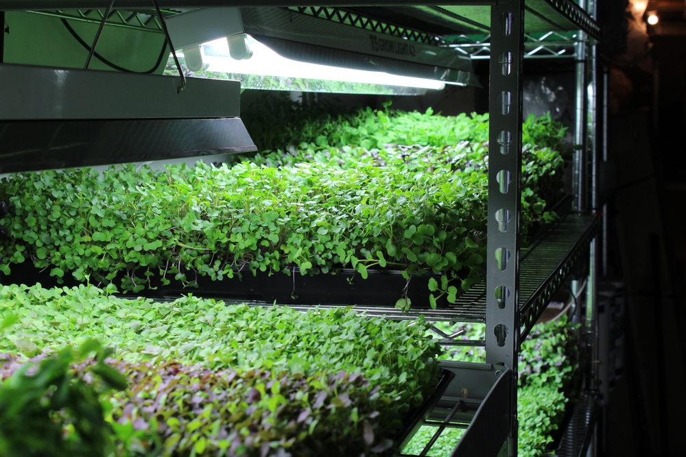 What is the future of urban agriculture? (Photo by Robin Dienel).