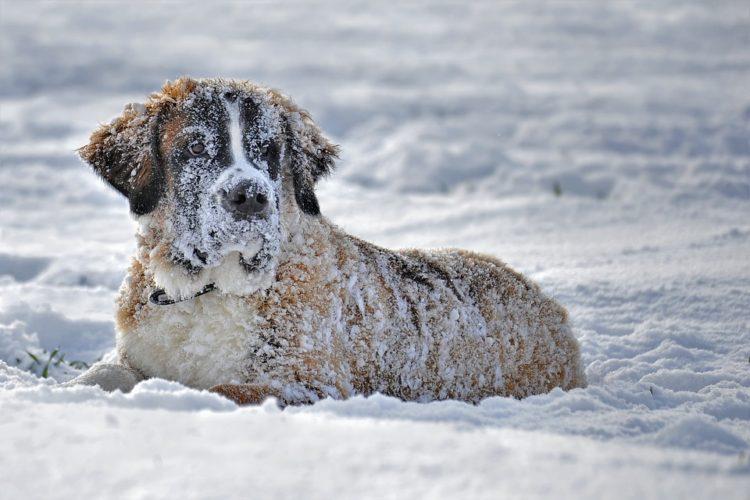 snow-1136225_960_720-750x500.jpg