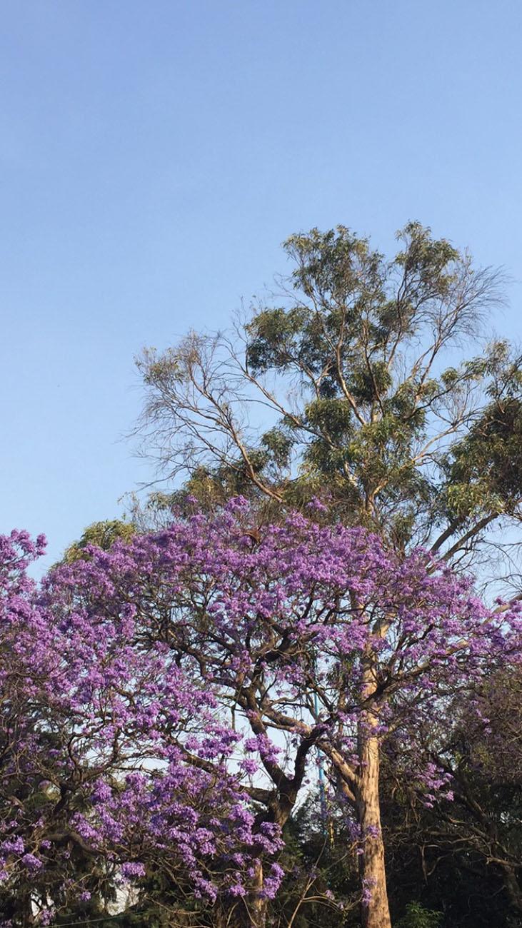 Shiona_Turini-Travel_Mexico-Day_2-01.jpg