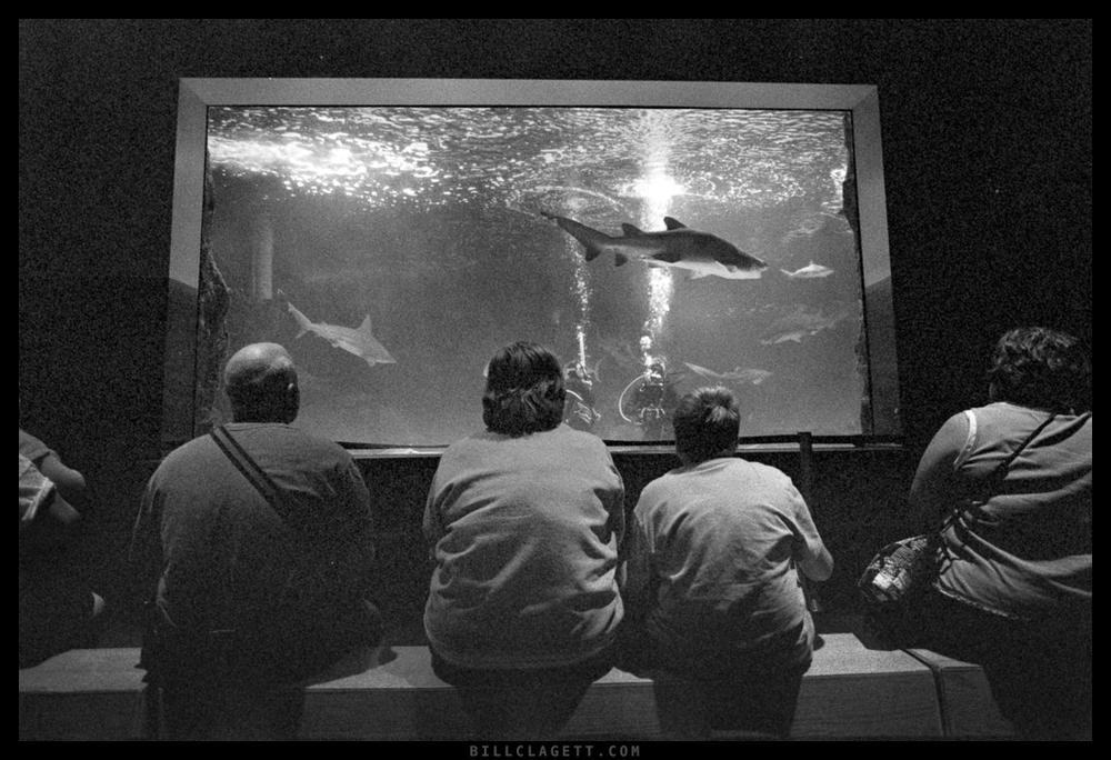 Newport Aquarium October, 2011