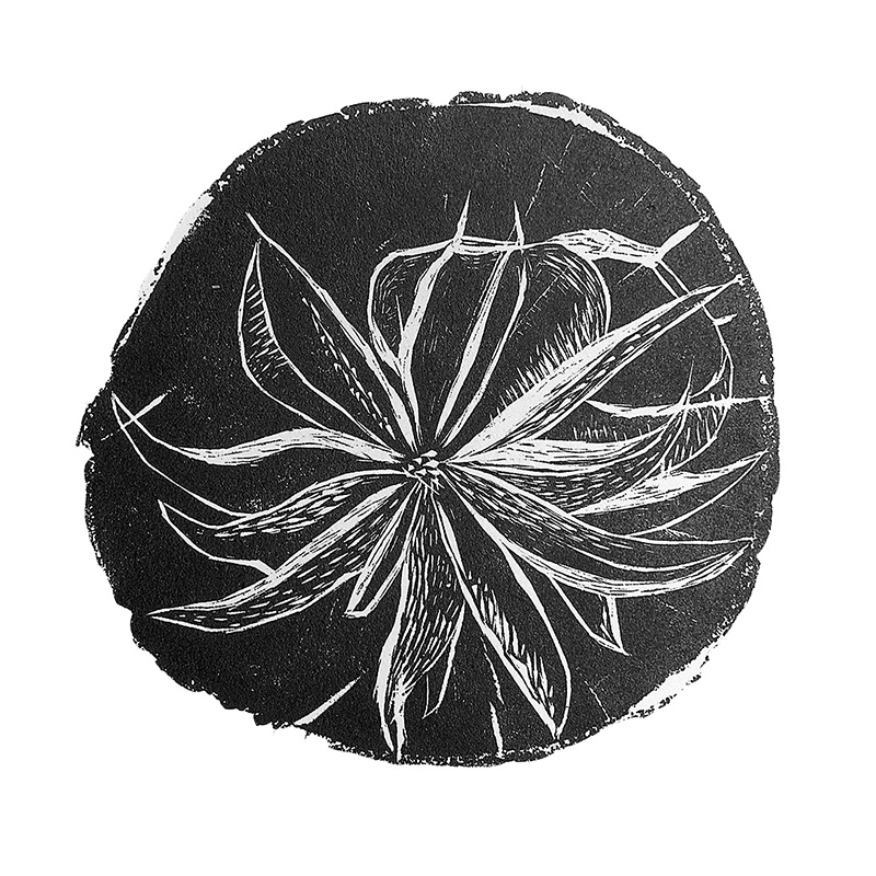 Fall Flower 1