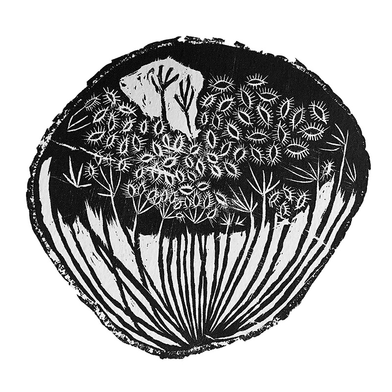 seedpod.jpg