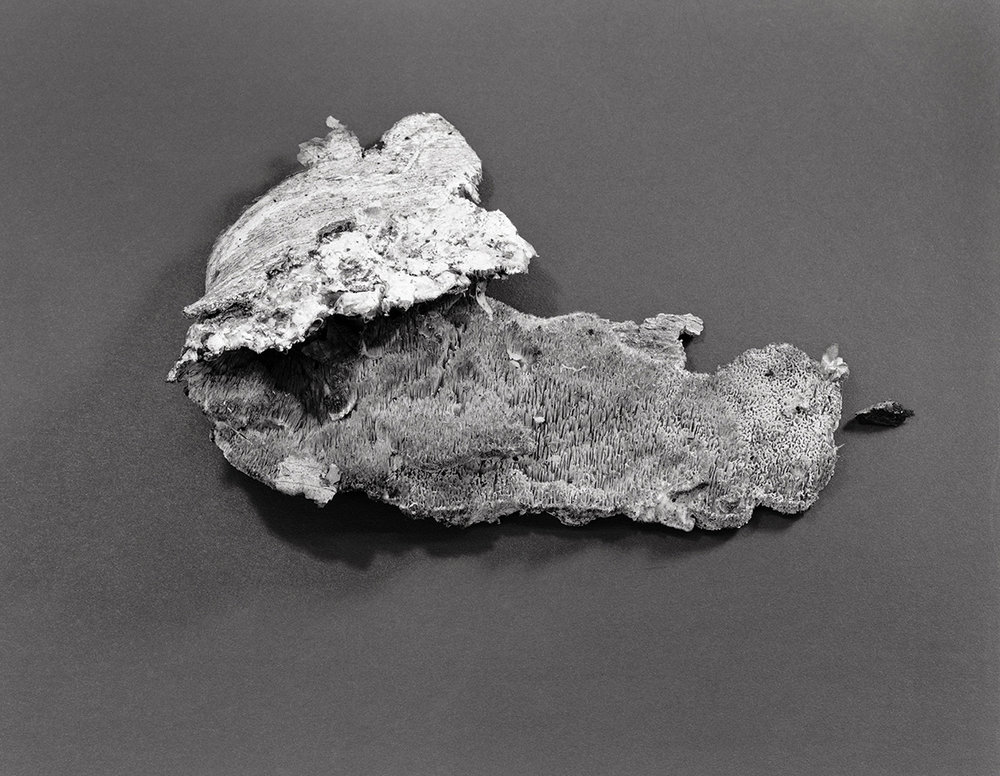 fungus 3W.jpg