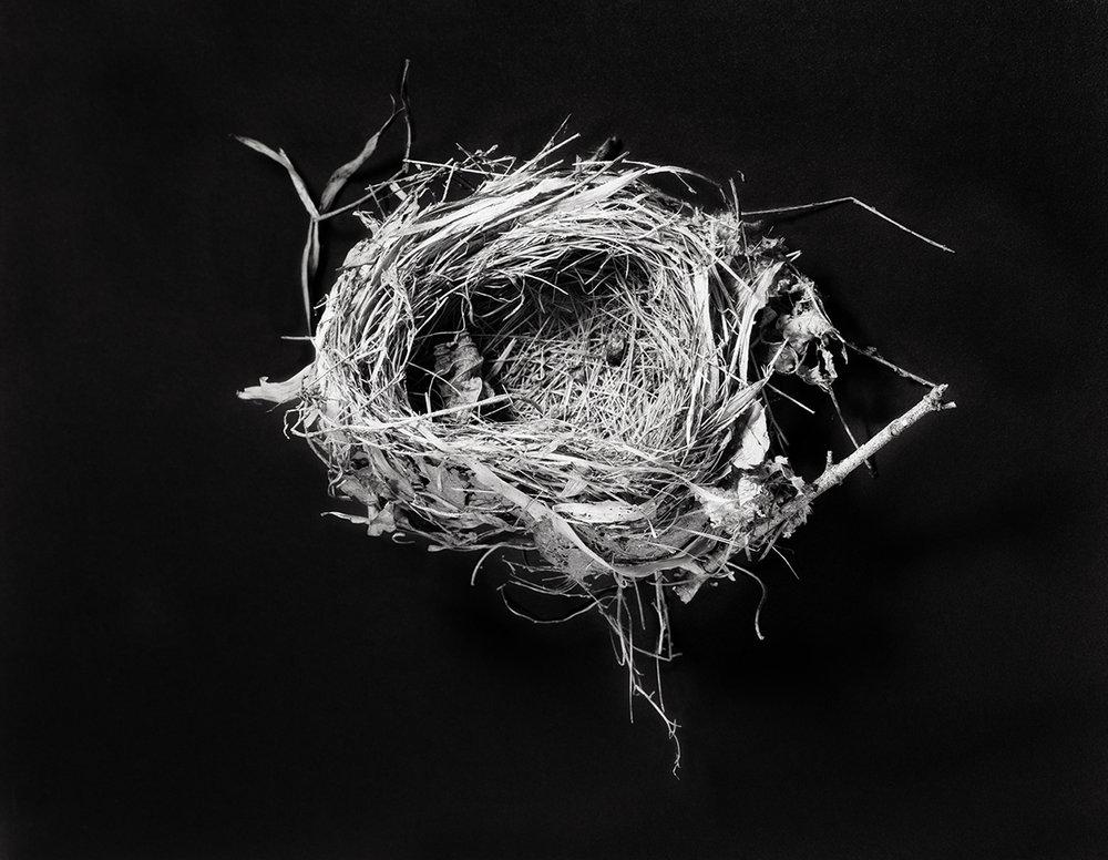 nest 1W.jpg