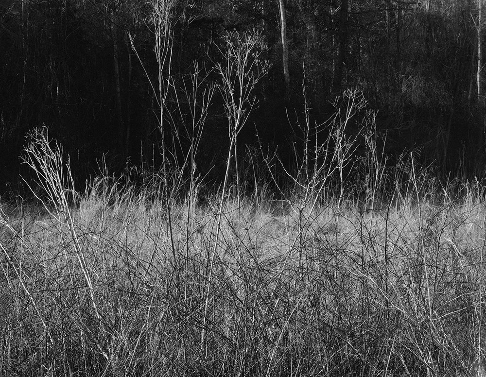 dead flowers (DARK)W 8x10.3.jpg