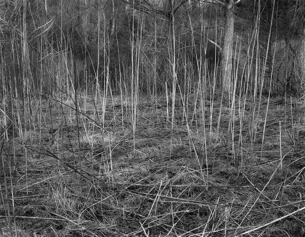 dead stalksW_8x10.3.jpg